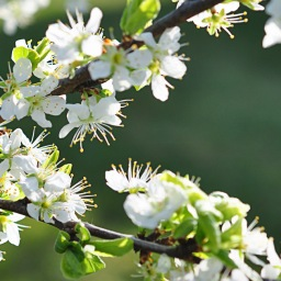 Zarte Blüte